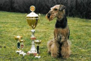 photo champion with cups
